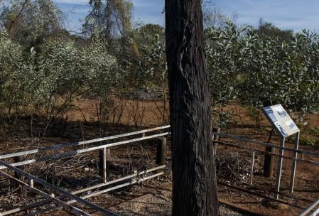 Stuart Tree, Daly Waters, NT